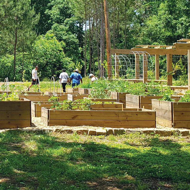 Edible Abundance: Raised beds at the Food Forest