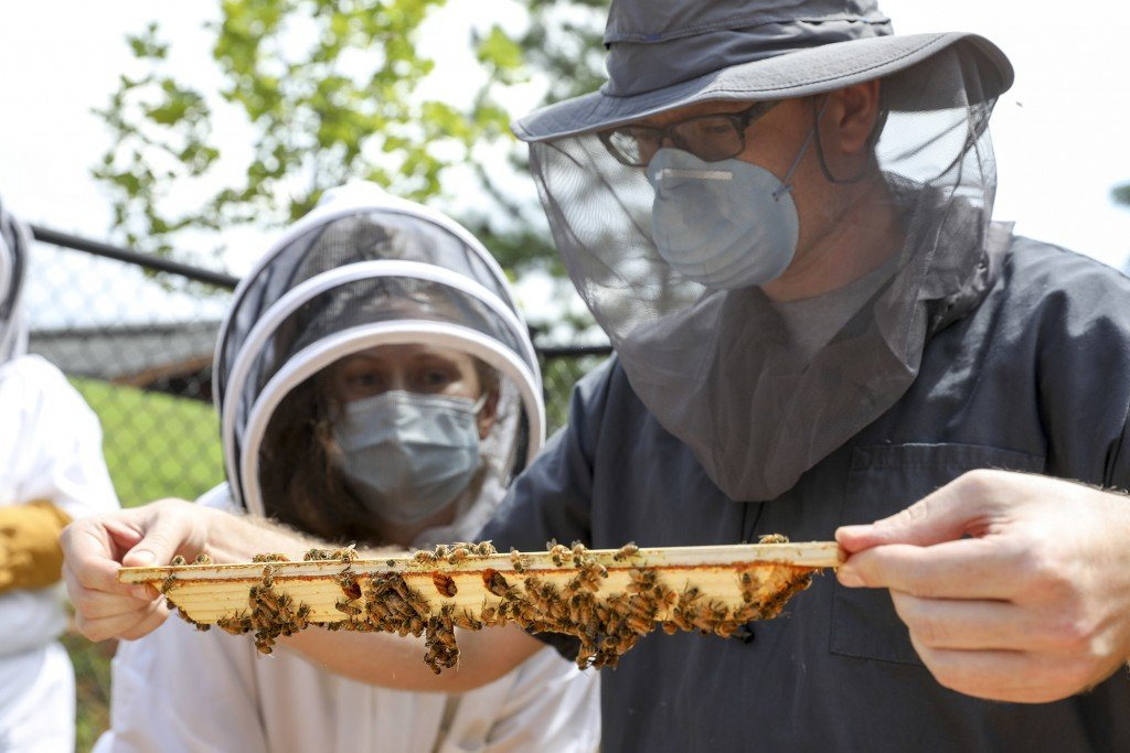 Dr. Joerg Mayer Teaching Profile/ Bee Hives