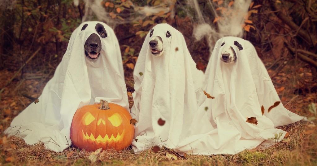 Halloween 2870607 1920