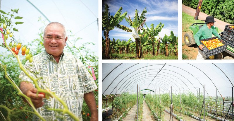 Richard Ha owns Hamakua Springs Country Farms, one of the largest producers of tomatoes in the Islands. Photo: Jason Kalawe