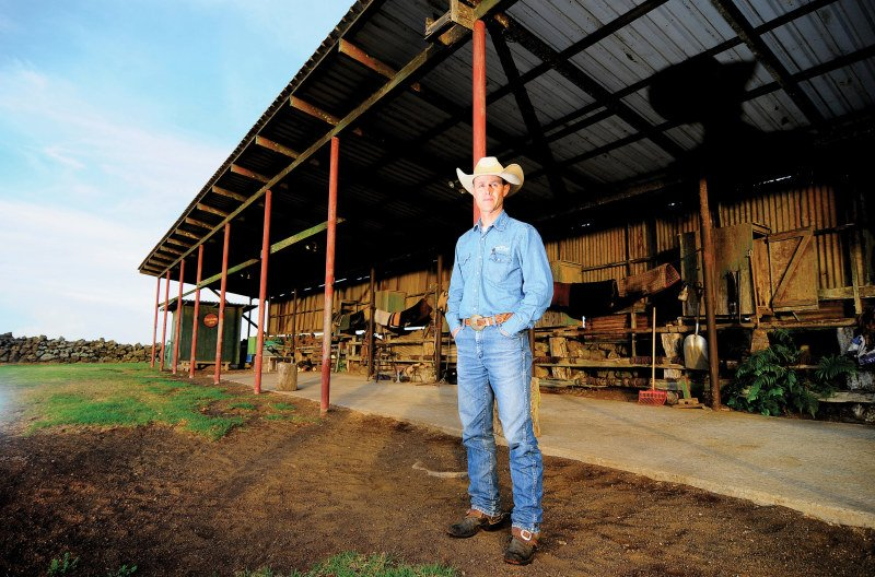 As livestock manager for Parker Ranch, Jason Van Tassell presides over a herd of about 40,000 head of cattle. Ranch operations also include turkeys, horses and sheep. Photos: Jason Kalawe