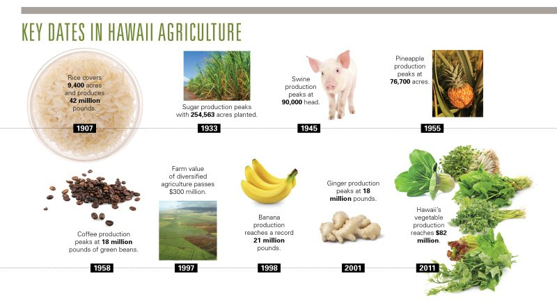 Key Dates in Hawaii Agriculture - 1907: Rice covers 9,400 acres and produces 42 million pounds. 1933: Sugar production peaks with 254,563 acres planted. 1945: Swine production peaks at 90,000 head. 1955: Pineapple production peaks at 76,700 acres. 1958: Coffee production peaks at 18 million pounds of green beans. 1997: Farm value of diversified agriculture passes $300 million. 1998: Banana production reaches a record 21 million pounds. 2001: Ginger production peaks at 18 million pounds. 2011: Hawaii's vegetable production reaches $82 million.
