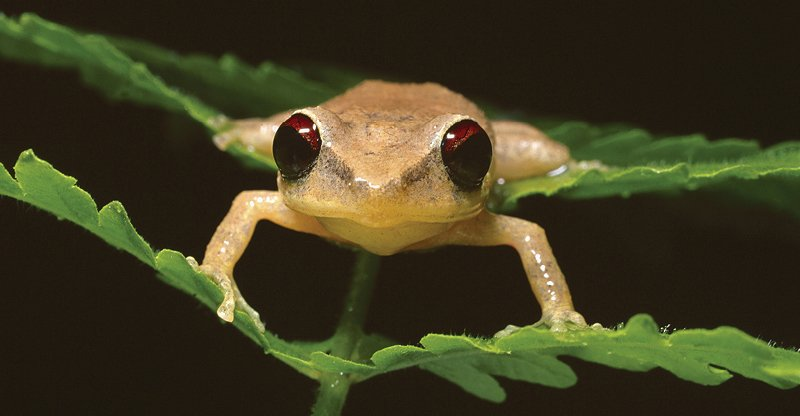 Invasive species, such as coqui frogs, reduce the environment's value. One way that's measured: lower home prices where coquis are heard.