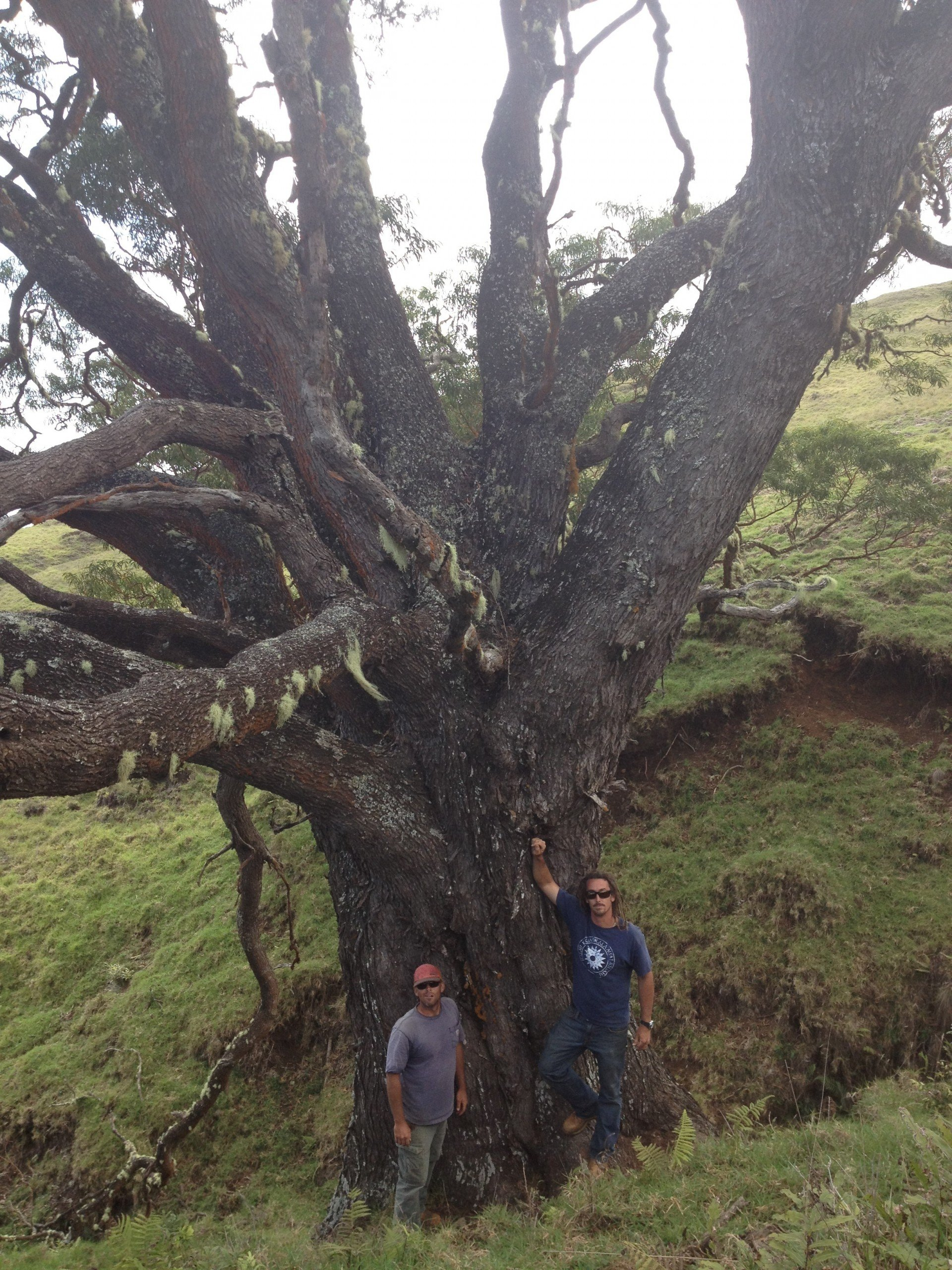 The partners at a koa tree in the Kahikinui Forest Reserve, which is on the south slope of Haleakala. Photo: Courtesy Christine Waara
