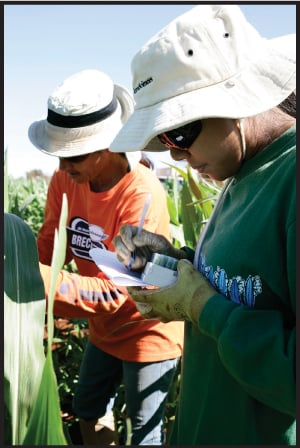 Dow employees gather plant tissue samples for trait screening at the company's farm on Molokai.