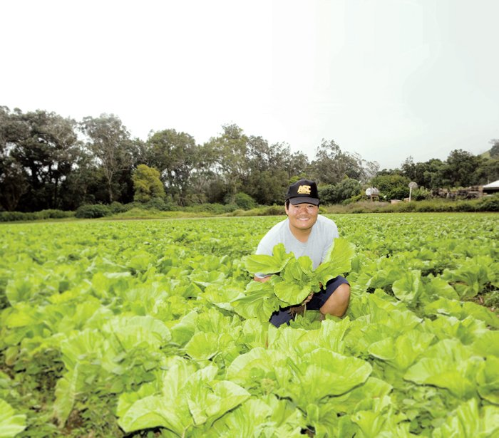 Justin Hirako of Hirako Farms in Waimea on Hawaii island holds mustard cabbage. His farm partners with KTA Super Stores to bring his products to local customers. Photo: Courtesy KTA Super Stores
