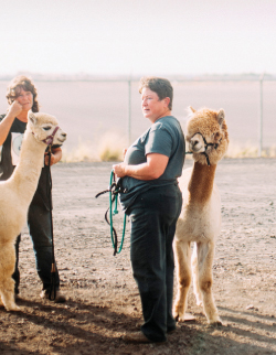 Alpaca breeders Gayle Marquess, left, and Jenny Brundage wait with their new alpacas for a veterinarian's check at the airport.