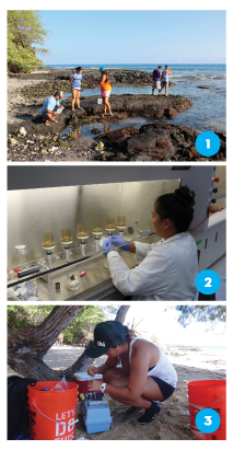 1) UH Hilo summer interns and graduate students collect water quality and algae samples at Puako for a project documenting nearshore sewage pollution. The students are Devon Aguiar, Jazmine Panelo, Leilani Abaya, Bryan Tonga, and Belytza Velez-Gamez. 2) Leilani Abaya, a master's student at UH Hilo's graduate program in Tropical Conservation Biology and Environmental Science, filters water samples from Puako to determine concentrations of fecal indicator bacteria. These bacteria are used to assess whether the water is polluted with sewage. 3) Evelyn Braun, a UH Hilo summer intern with the Pacific Internship Programs for Exploring Science, measures water turbidity (cloudiness) at Waialea Beach, one of the stations for the Puako sewage project. Photos by Logan Mock-Bunting