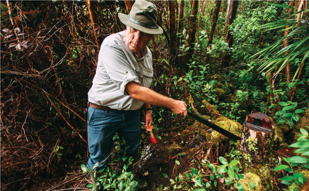 UH Manoa forestry researcher J.B. Friday leads fellow scientists through a forest in the Puna district of Hawaii Island where rapid ohia death has devastated many of the trees. Photo by Megan Spelman
