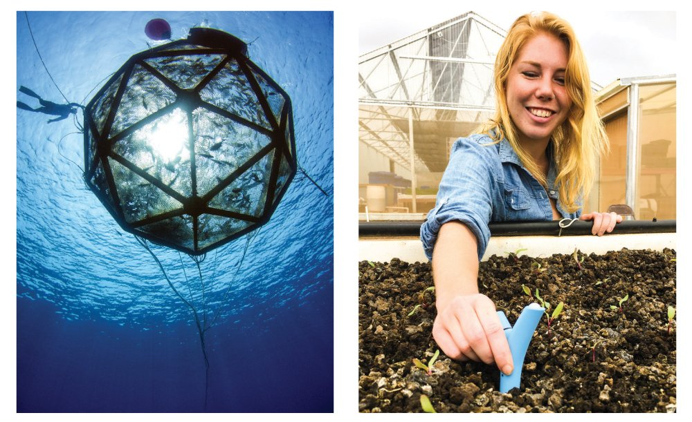 Left: Kampachi Farms - Gavin Key, a researcher at Kampachi Farms, swims next to an Aquapod net pen, 22 feet in diameter and stocked with 2,000 kampachi fish. It was moored 6 miles offshore of Keauhou Bay in Kona. RIGHT: Smart Yields's Kristen Jaimeson places a sensor among plants at Mari's Gardens in Mililani. Smart Yields' water, air and soil sensors provide frequent data so farmers can make informed decisions.