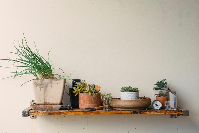 shelf of outdoor plants
