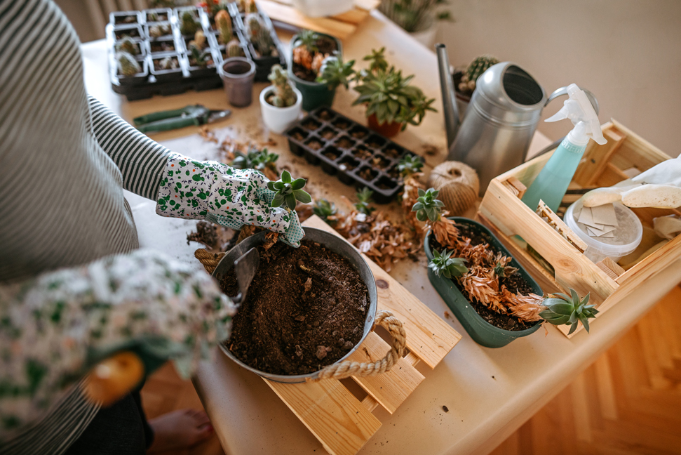 house-plant-tools-gardening