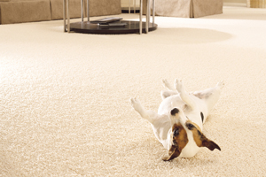 Carpet Supplier
