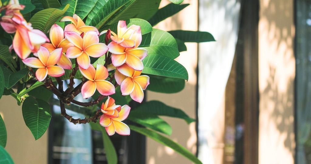 HHR-03-19-Featured-Image-Gardening