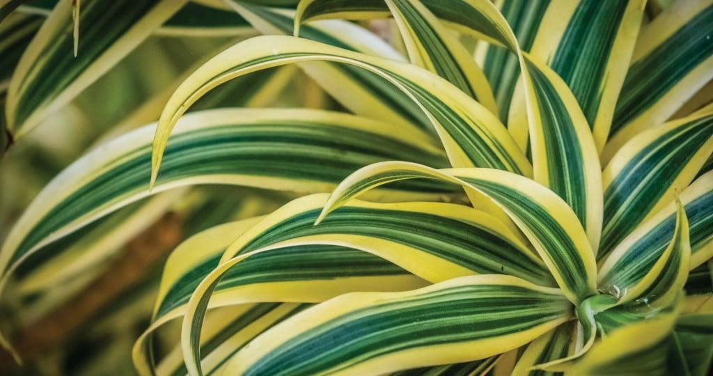 HHR-04-18-Featured-Image-Plants