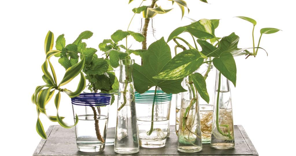 HHR-05-16-Featured-Plants