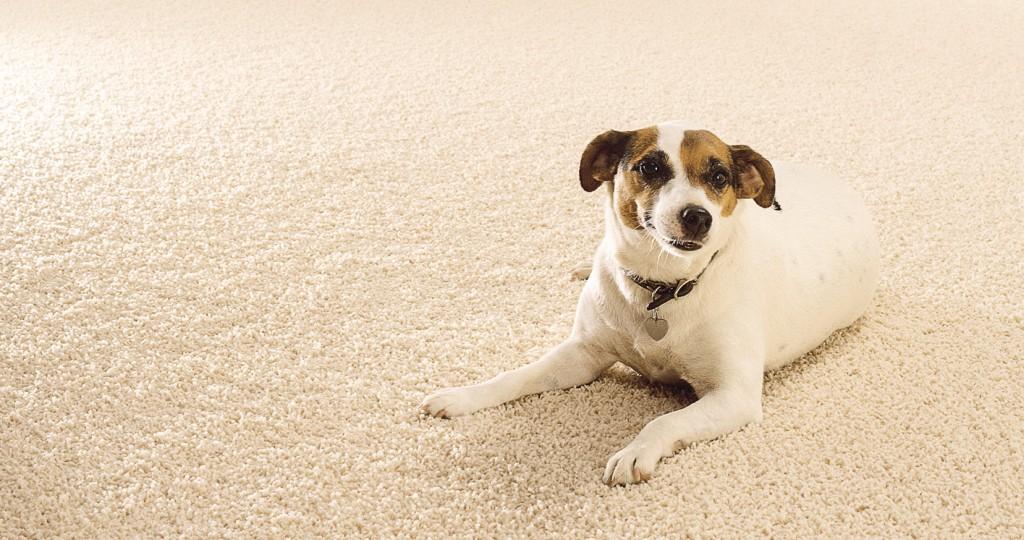 HHR-06-19-Featured-Image-Readers Choice Carpet
