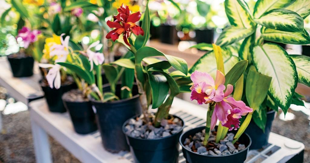 HHR-09-17-Featured-Plant