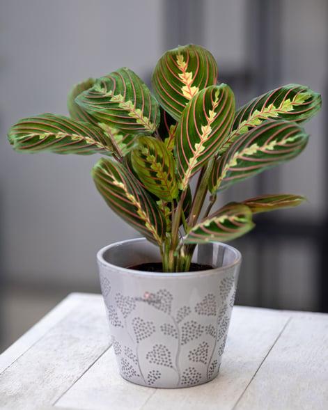 pet-friendly plants
