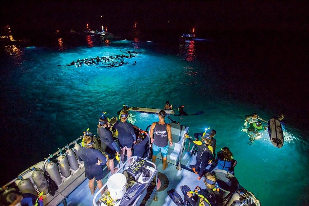 manta ray diving hawaii