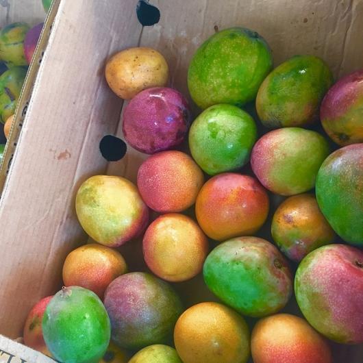 mangoes at the moana surfrider