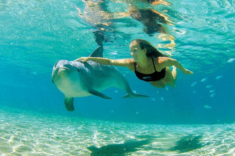Dolphin Quest(Waikoloa)
