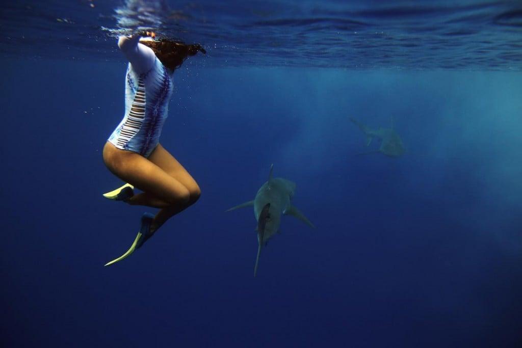 Freedive+Sharks+Hawaii