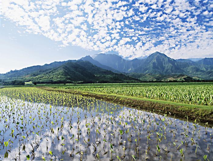 Haraguchi Rice Mill 1