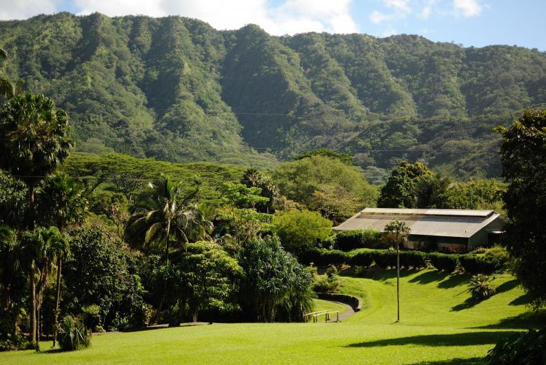 Lyon Arboretum Oahu