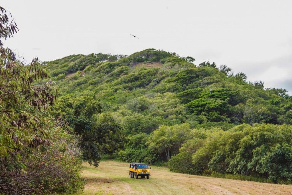 Oahu_LegacyForest5
