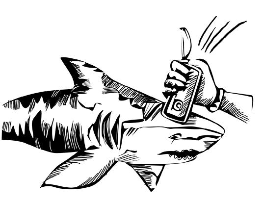 Shark Attack1