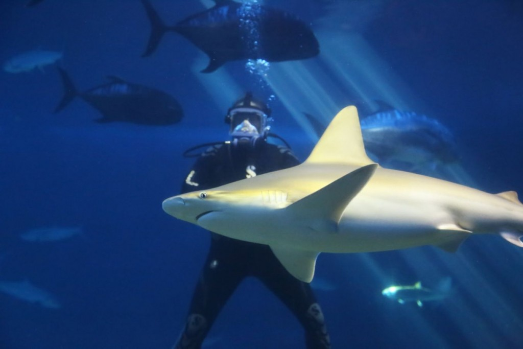 Shark Dive Maui-11