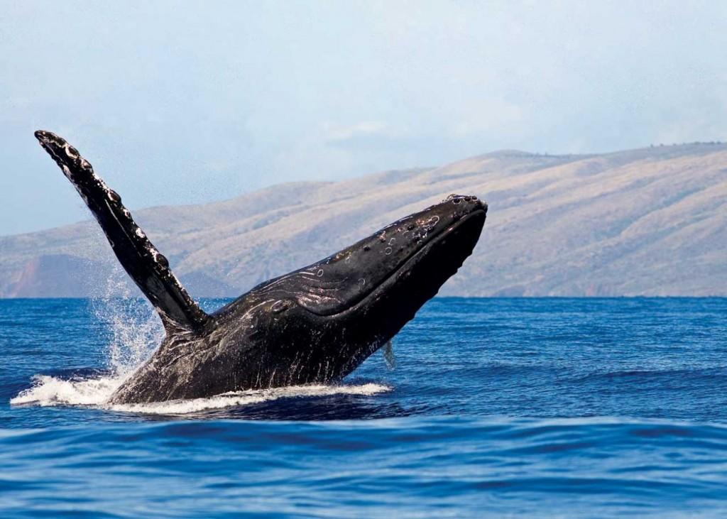 Whale_Croxford_HiM0708-V8198