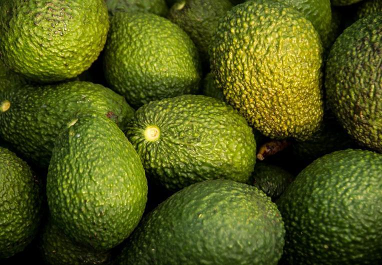 big island hawaii avocado varieties