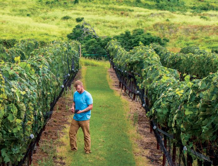 maui wine tours
