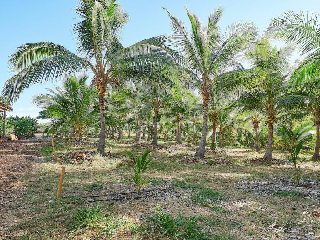 Punakea Palms on Maui