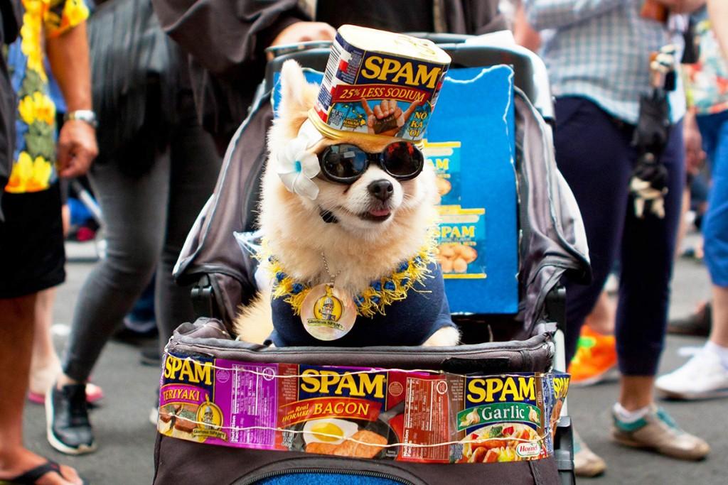 spam-jam_tracy