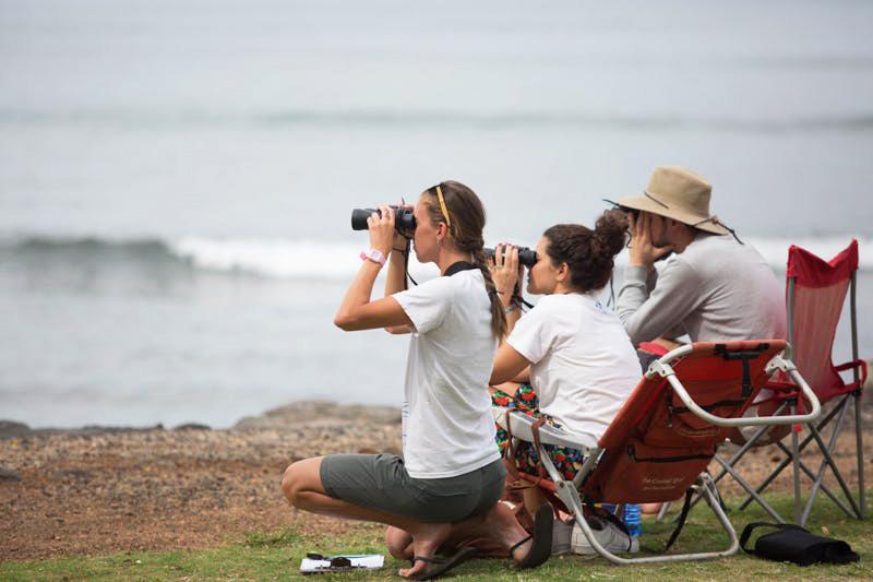 volunteer-whale count