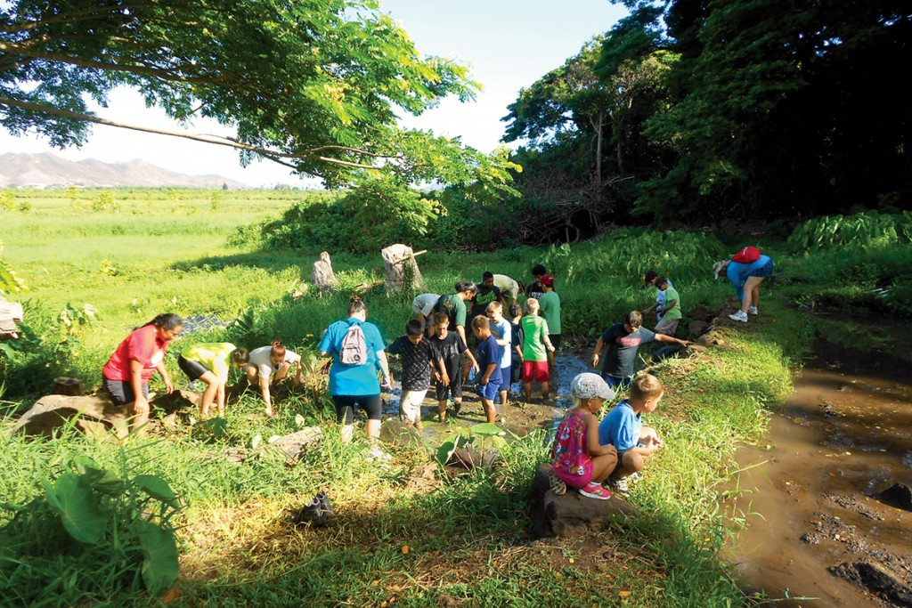 volunteers-in-lo'i-kalo