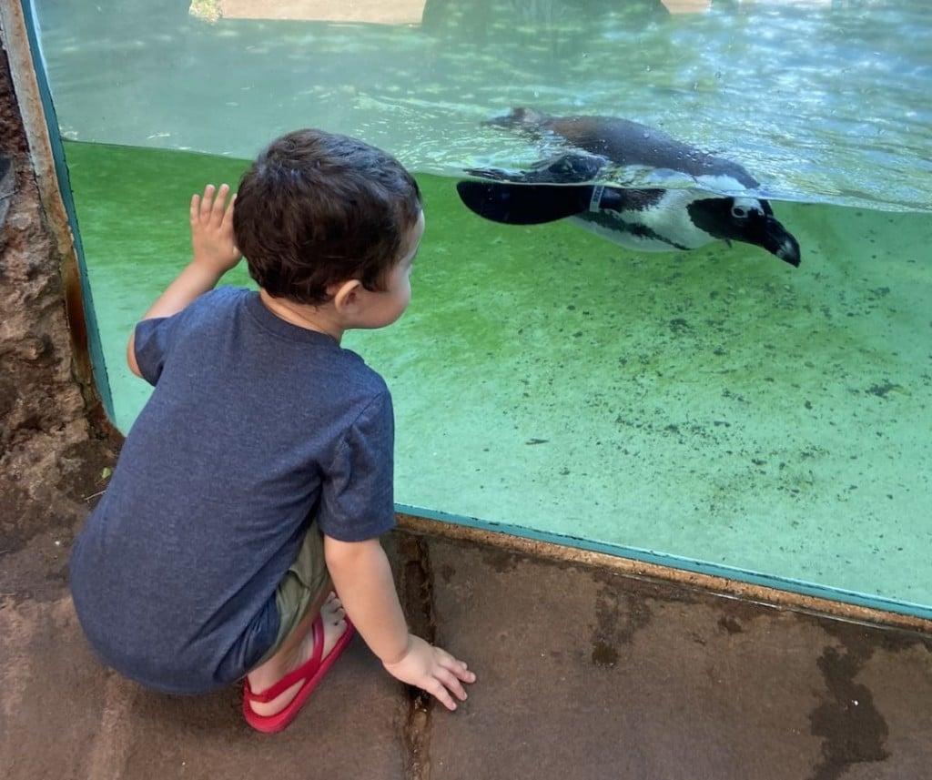 zoo-opens