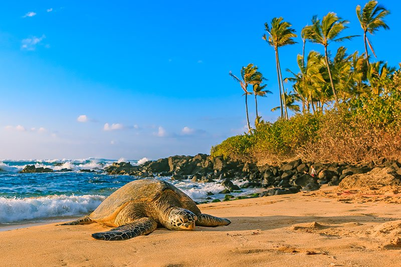 Turtle Northshore Gettyimages 670259718