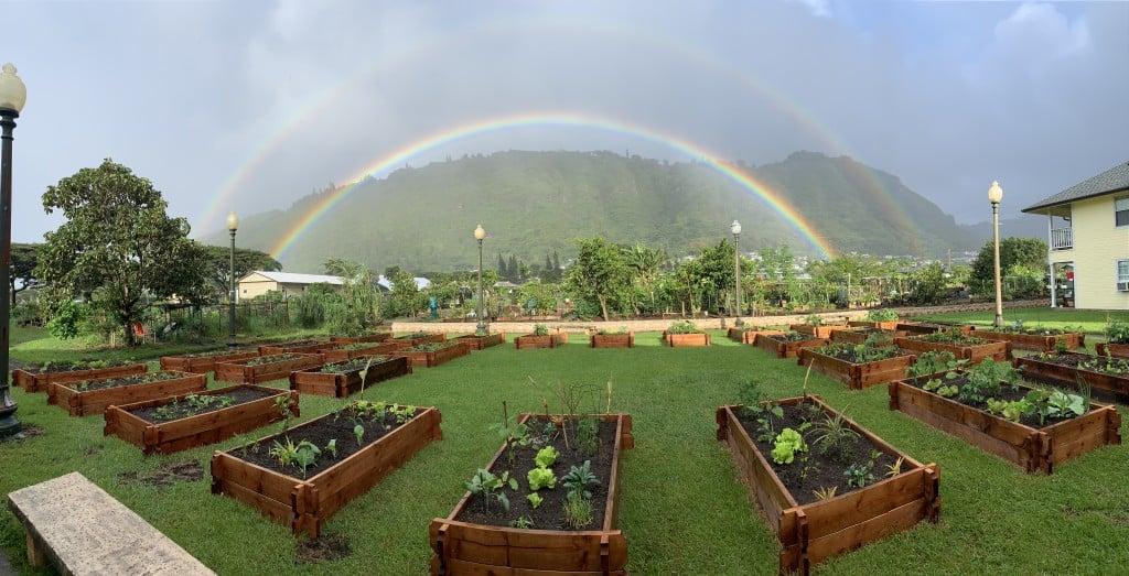 Manoa Garden Rainbow 1