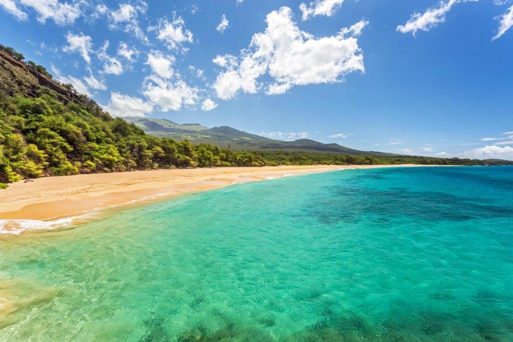 Tropical Paradise Found