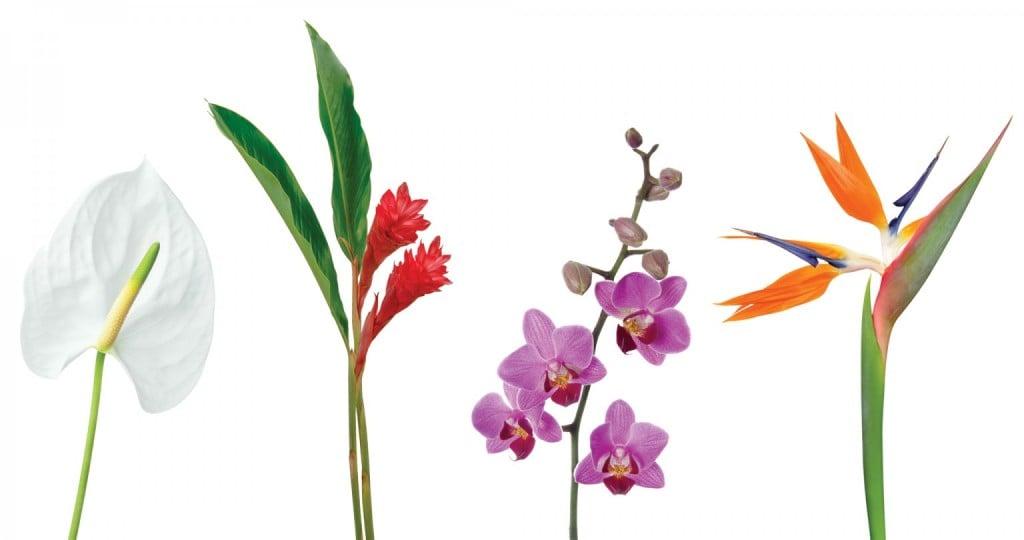 03 21 Hhr Welcome Florals Featured 1536x810