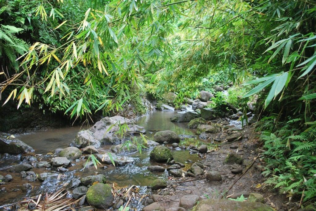 Maunawili Hiking Trail In Oahu, Hawaii