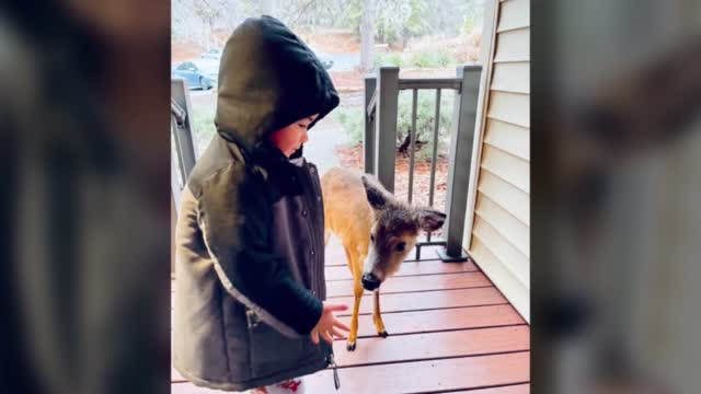 Boy Brings Home Best Friend Who Is Also A Deer
