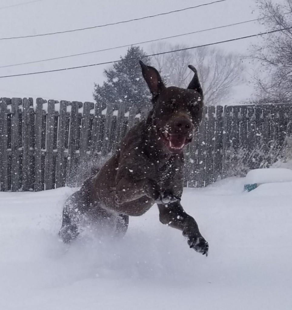 Katy Knoches Dog Moose