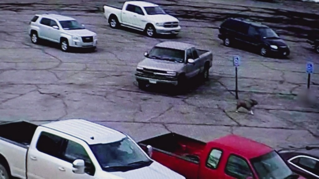Lso: Man Seen On Video Kicking Dog Won't Be Cited