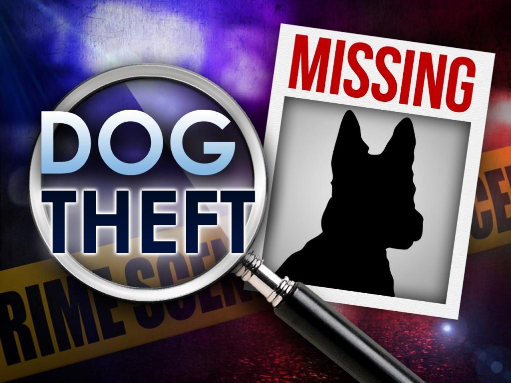 dog theft