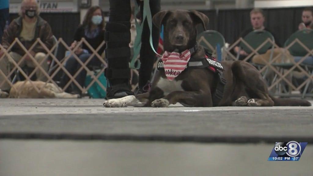 Local Veterinarians Seeing 'pet Boom'